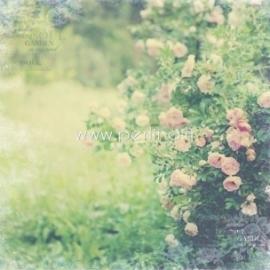 "Popierius ""Rose Garden - In Bloom collection"", 30,5x30,5 cm"