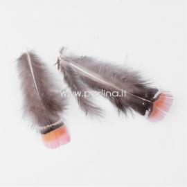 Plunksna vištos, pilka-raudonos plytos sp., 70~75x30~40mm, 1 vnt