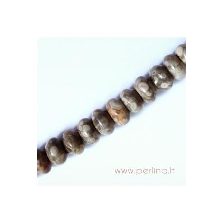 Natūralus kriauklių fosilijų karoliukas, 5x8 mm